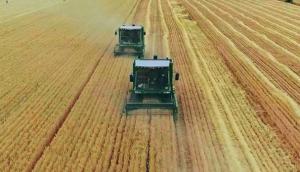 金大丰小麦收割机作业视频