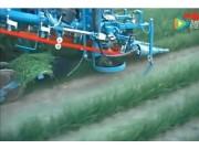 阿薩利公司SP200 PU韭菜收獲機作業視頻