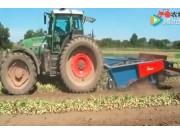 阿萨利公司WR-290大蒜起收条铺机作业视频