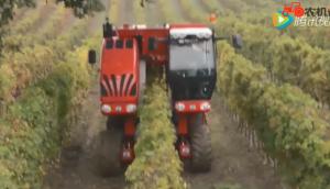 博格公司V-TrackTRS30葡萄橄欖收獲機作業視頻