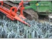LAUWERS公司大葱和芹菜收获机视频