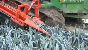 LAUWERS公司大蔥和芹菜收獲機視頻