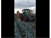 Verhoest公司韭葱收获机视频