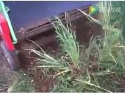 Wega公司1400型大蒜起收机视频