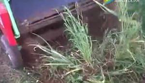 Wega公司1400型大蒜起收機視頻
