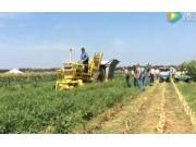 萬國Chisholm-Ryder青豆收獲機視頻