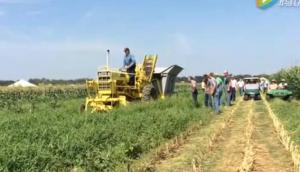 万国Chisholm-Ryder青豆收获机视频