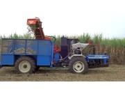 Shaktiman公司3737型甘蔗收获机视频