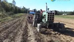 Wood Prairie農場土豆收獲視頻