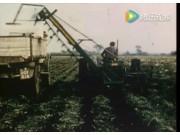 1959年国外胡萝卜收获机视频