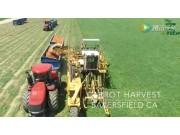 加拿大胡萝卜机械化收获视频