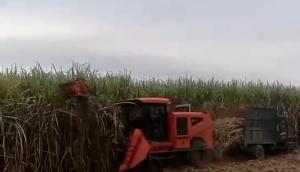 20年研发技术款甘蔗联合收割机