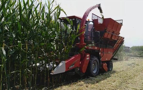 牧神4YZB-3A自走式玉米收獲機甘肅平羅作業視頻