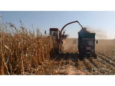 牧神4YZB-4B自走式玉米收获机工作视频