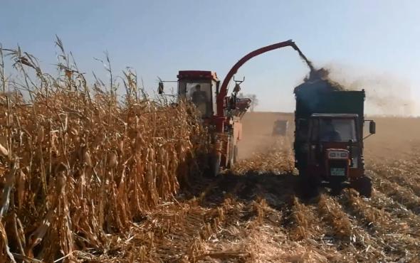 牧神4YZB-4B自走式玉米收獲機工作視頻