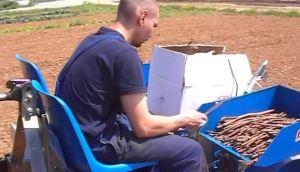 意大利法拉利(FERRARI)FPP型移栽机作业视频
