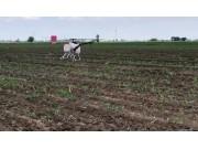 漢和航空水星一號植保無人機內蒙甜菜作業視頻