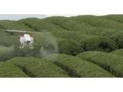 汉和航空水星一号植保无人机宜兴茶园作业视频