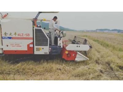 金大丰-2018款新款水稻机收割小麦和油菜视频
