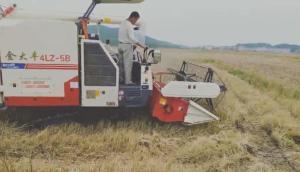 金大豐-2018款新款水稻機收割小麥和油菜視頻