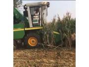 金大丰4YZP-4F玉米收获机作业视频