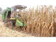 金大丰4YZP-3D玉米收获机作业视频