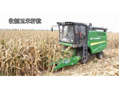 金大丰4YZL-5玉米籽粒联合收获机作业视频