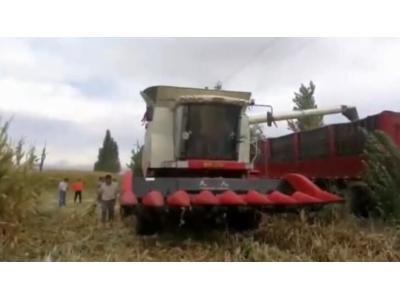 雷沃谷神GK100玉米机-用户采访