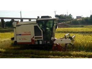 金大丰4LZ-6A谷物联合收割机作业视频