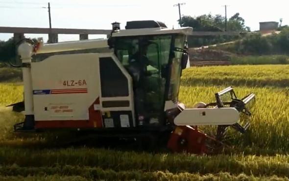 金大豐4LZ-6A谷物聯合收割機作業視頻