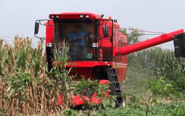 中農博遠4YL-5玉米聯合收獲機作業視頻