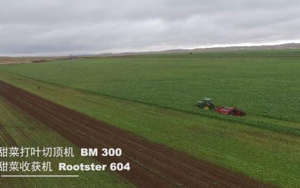 格立莫GRIMME甜菜兩段式收獲BM300+ROOTSTER60作業視頻