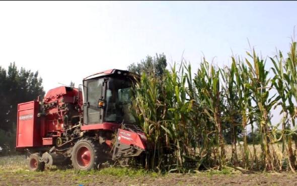 郑州中联2019款玉米机作业视频