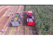 牧澤4QZ-14A青貯飼料收獲機最新作業視頻