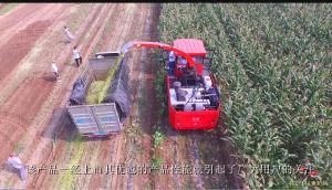 牧泽4QZ-14A青贮饲料收获机最新作业视频