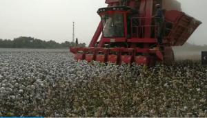 钵施然4MZ-6A自走式棉花收获机作业视频2