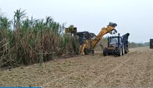 柳工S935T切段式甘蔗收獲機現場演示視頻