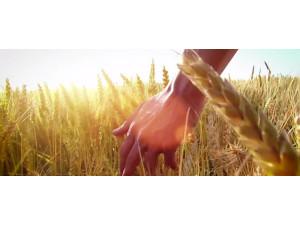道依茨法尔专题片--《初心》
