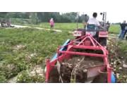 青島方正馬鈴薯4U-100加長收獲機作業視頻