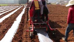青岛方正大垄双行马铃薯种植机种植现场视频