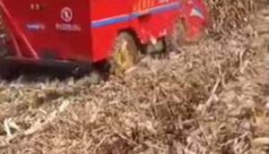 新農發三行四驅玉米收——速度快