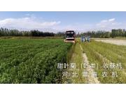 河北雷肯甜叶菊(叶类)收获机产品视频