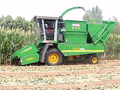 金大丰4行穗茎兼收玉米收获机作业视频