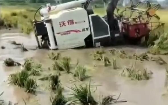 沃得锐龙专业跨区版烂泥田收割作业视频