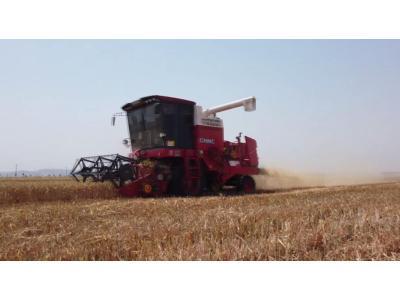 鄭州中聯收獲小麥收割機作業視頻