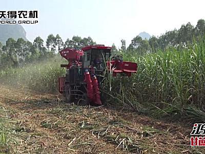 沃得鴻龍甘蔗收獲機作業視頻