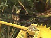 北京德乐4QZ-830A青贮饲料收获机-收倒伏现场
