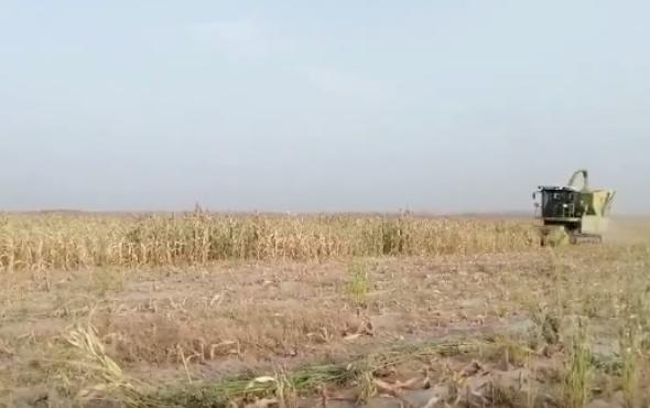"""科脈機械4QZL-2400青飼料收獲機再次扛起""""糧改飼""""重擔"""