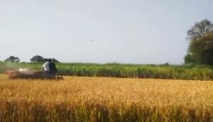 湖南農夫4LBZ-120YA半喂入聯合收割機作業視頻