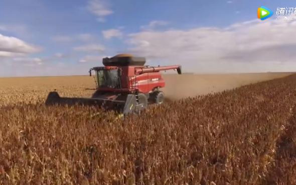 卓收诚信在线客服微信农机Drago_Gold割台收获高粱-作业视频